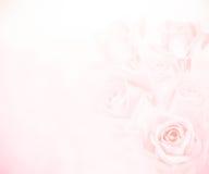 Fundo cor-de-rosa das rosas fotos de stock royalty free