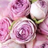 Fundo cor-de-rosa das rosas Vista superior fotos de stock