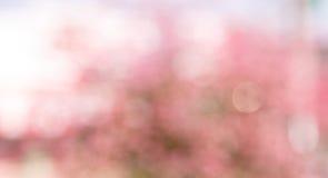 Fundo cor-de-rosa do bokeh do borrão imagens de stock