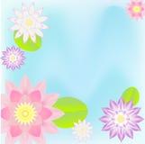 Fundo cor-de-rosa do cartão dos lótus Fotografia de Stock Royalty Free