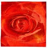 Fundo cor-de-rosa do grunge do vermelho Foto de Stock Royalty Free