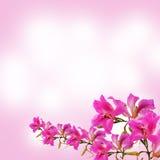 Fundo cor-de-rosa do sumário do borrão Fotos de Stock Royalty Free