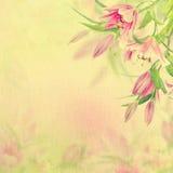 Fundo cor-de-rosa dos lírios Fotografia de Stock Royalty Free