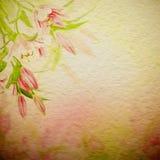 Fundo cor-de-rosa dos lírios Fotografia de Stock