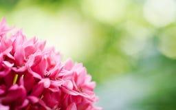 Fundo cor-de-rosa e verde DoF raso da natureza com espaço da cópia, m Imagem de Stock Royalty Free
