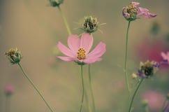 Fundo cor-de-rosa macio da flor Fotos de Stock Royalty Free