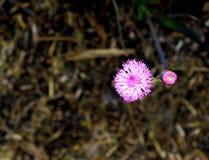 Fundo cor-de-rosa pequeno agradável da flor fotos de stock