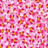 Fundo cor-de-rosa de Vanda Miss Joaquim Orchid Seamless Flor do nacional de Singapura Ilustração do vetor ilustração royalty free