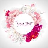 Fundo cor-de-rosa, vermelho e branco da peônia Foto de Stock Royalty Free