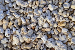 Fundo coral Imagem de Stock Royalty Free