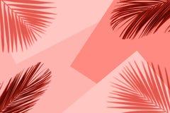 Fundo coral tropical da cor com folhas de palmeira tropicais exóticas Conceito mínimo do verão Configuração lisa fotografia de stock royalty free