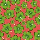 Fundo coral vivo sem emenda do hibiscus das flores do cal ilustração stock