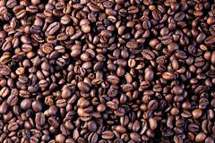 Fundo criado dos feijões de café Imagem de Stock