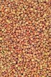Fundo cru da aveia em flocos de trigo mourisco, sementes de cereal seco, grande teste padrão macro textured detalhado vertical da foto de stock
