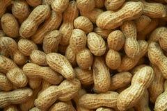 Fundo cru dos amendoins Muitos amendoins nos escudos fotografia de stock