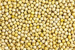 Fundo cru dos grãos-de-bico Fotos de Stock Royalty Free