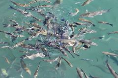 Fundo da água azul do mar foto de stock royalty free