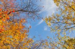 Fundo da árvore Foto de Stock