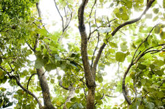 Fundo da árvore e da folha Fotografia de Stock Royalty Free