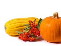 Fundo da ação de graças da abóbora de outono com ramo da sorva Fotografia de Stock Royalty Free