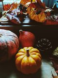 Fundo da ação de graças: abóboras, folhas de outono, laranjas e cones no fundo de madeira Fotos de Stock
