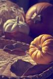 Fundo da ação de graças com abóboras. Cartão retro Fotografia de Stock Royalty Free