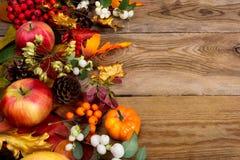 Fundo da ação de graças com maçãs, o bordo dourado e as folhas do carvalho Fotos de Stock