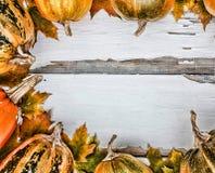 Fundo da acção de graças Abóboras em um fundo de madeira branco Espaço livre para o texto Vista de acima Fotografia de Stock