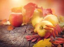 Fundo da acção de graças Folhas, maçãs e peras coloridas do outono imagem de stock royalty free