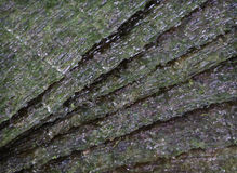 Fundo da alga de Nori Imagem de Stock Royalty Free