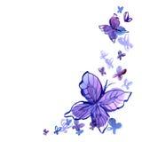 Fundo da aquarela com borboleta dentro Imagens de Stock