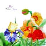 Fundo da aquarela com papoila e flores Imagens de Stock Royalty Free