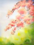 Fundo da aquarela no estilo japonês Ramos da florescência Fotografia de Stock Royalty Free