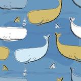 Fundo da baleia de esperma Fotos de Stock Royalty Free