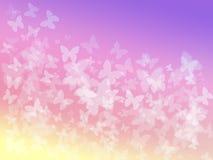 Fundo da borboleta Fotos de Stock