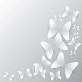 fundo da borboleta com sombra Fotos de Stock Royalty Free