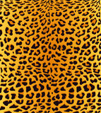 Fundo da cópia do leopardo Foto de Stock Royalty Free