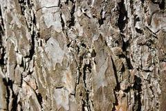 Fundo da casca de árvore Fotografia de Stock