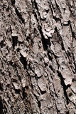 Fundo da casca de árvore Imagem de Stock Royalty Free