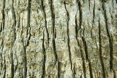 Fundo da casca de árvore Imagens de Stock Royalty Free
