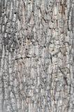 Fundo da casca de árvore Fotos de Stock Royalty Free