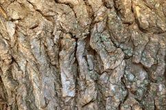 Fundo da casca de árvore imagem de stock