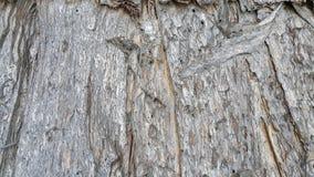 Fundo da casca de árvore fotografia de stock royalty free