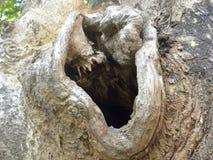 Fundo da casca de árvore da cor de Brown com um furo no centro imagens de stock royalty free
