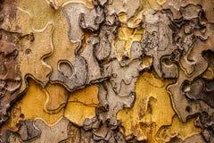 Fundo da casca de árvore da serra de vaivém Fotografia de Stock Royalty Free