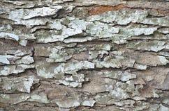 Fundo da casca de árvore Textura capaz da telha de Brown Imagens de Stock