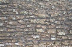 Fundo da casca de árvore Textura capaz da telha de Brown Fotos de Stock Royalty Free