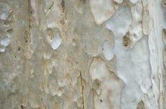 Fundo da casca de árvore Textura capaz da telha de Brown Fotografia de Stock