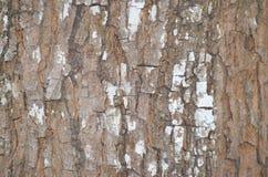 Fundo da casca de árvore Textura capaz da telha de Brown Imagem de Stock Royalty Free