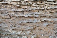 Fundo da casca de árvore Textura capaz da telha de Brown Foto de Stock Royalty Free